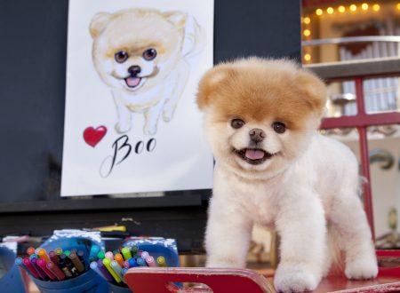 È morto il volpino Boo, il cane più bello del mondo